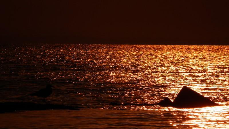 Азовское море. Ричард Бах. Блог саморазвития. Как раскрыть свое предназначение sTs 1  (Чайка по имени Джонатан Ливингстон)  (11)